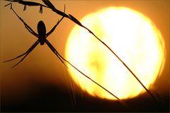 Spinne in der Sonne