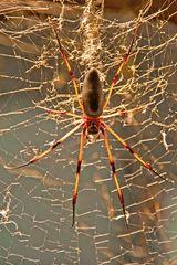 Spinne in der Wilhelma