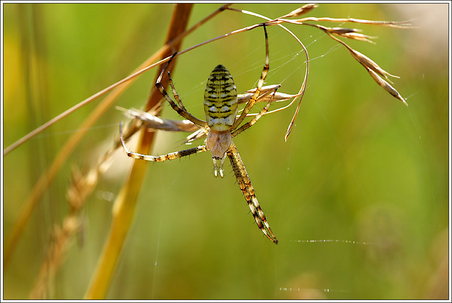 Spinne mit Migrations-Hintergrund