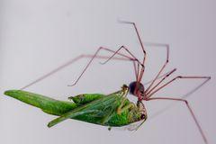 Spinne und Heuschrecke (I)