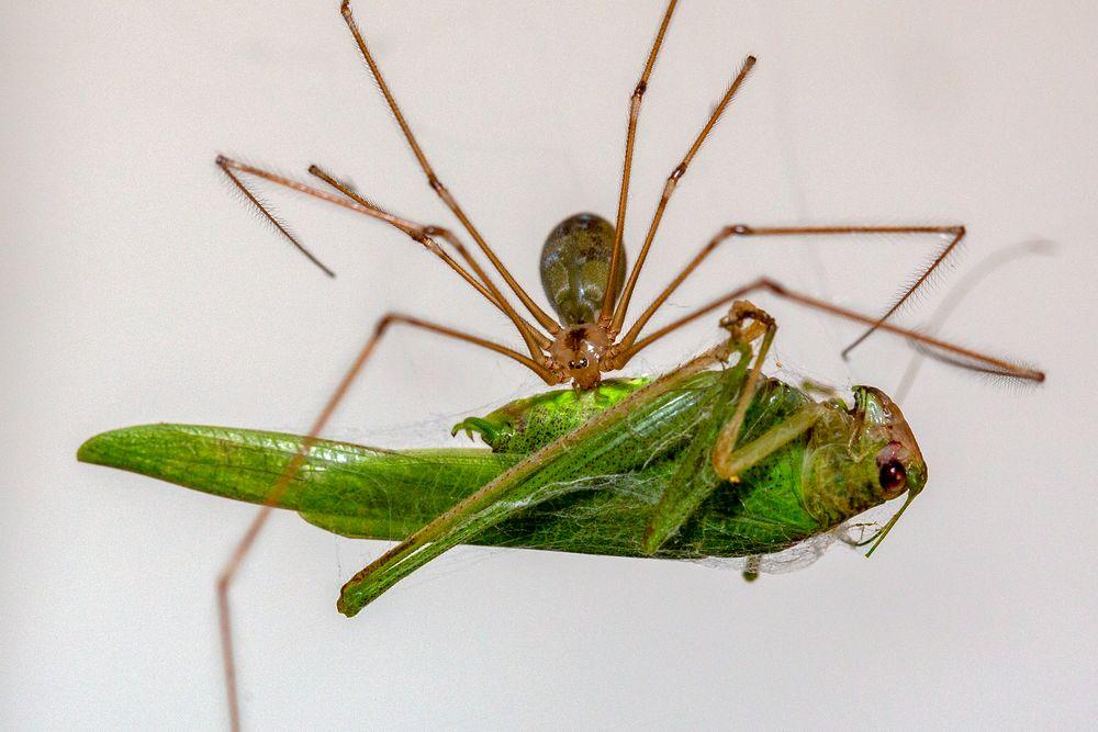 Spinne und Heuschrecke (II)