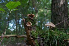 Spinne unter Pilzdach