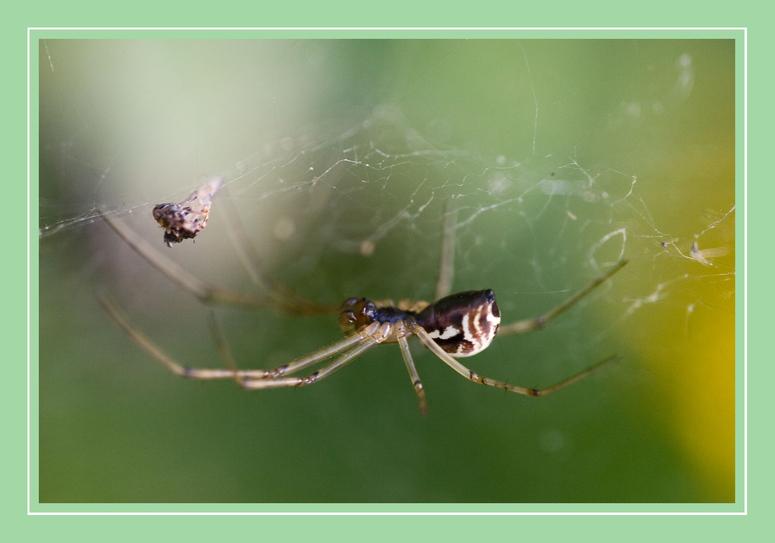 Spinne - Versuch eines Macros