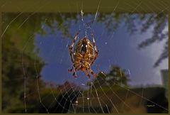 Spinne vor meinem Fenster