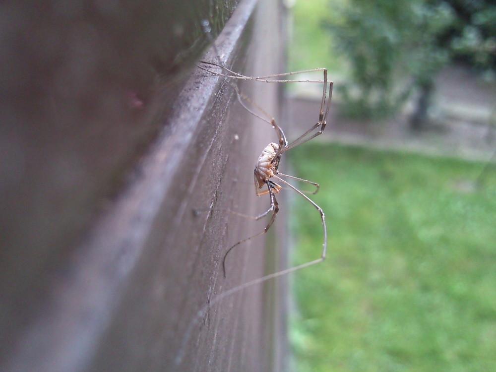 Spinne Zu Haus im Garten (Teil 1)