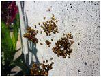 > Spinnen <