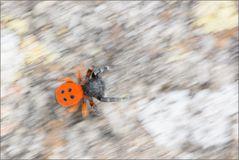 ~ Spinnen-Aquarell ~