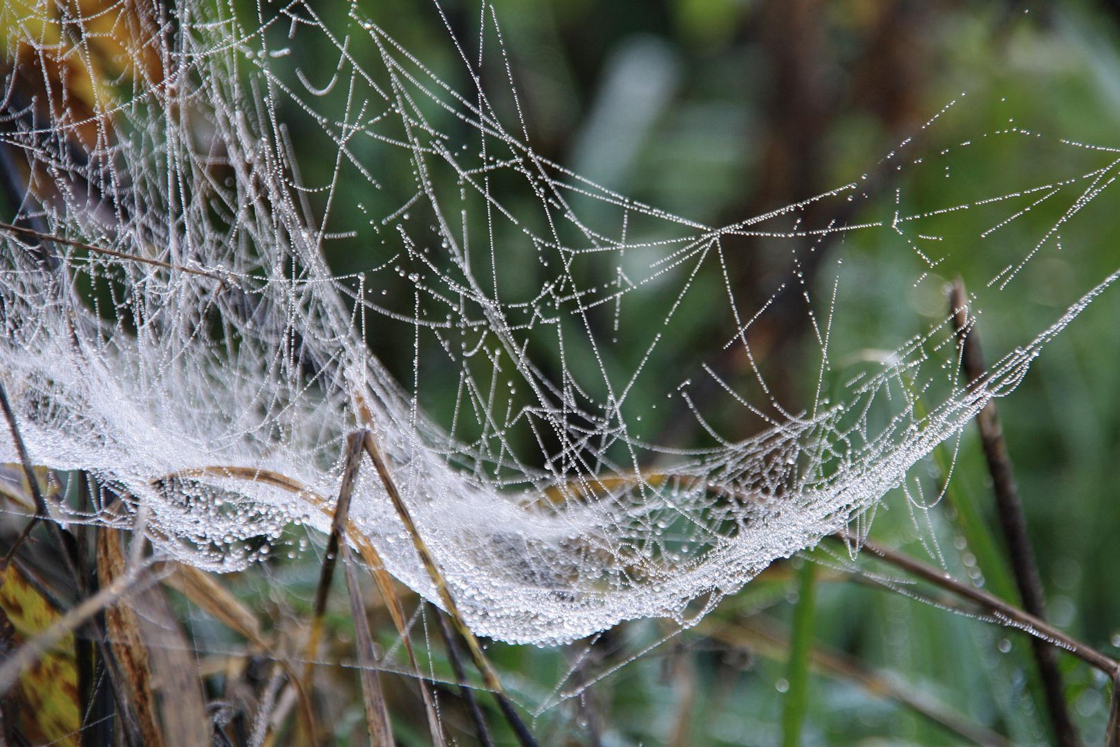 Spinnen-Architektur