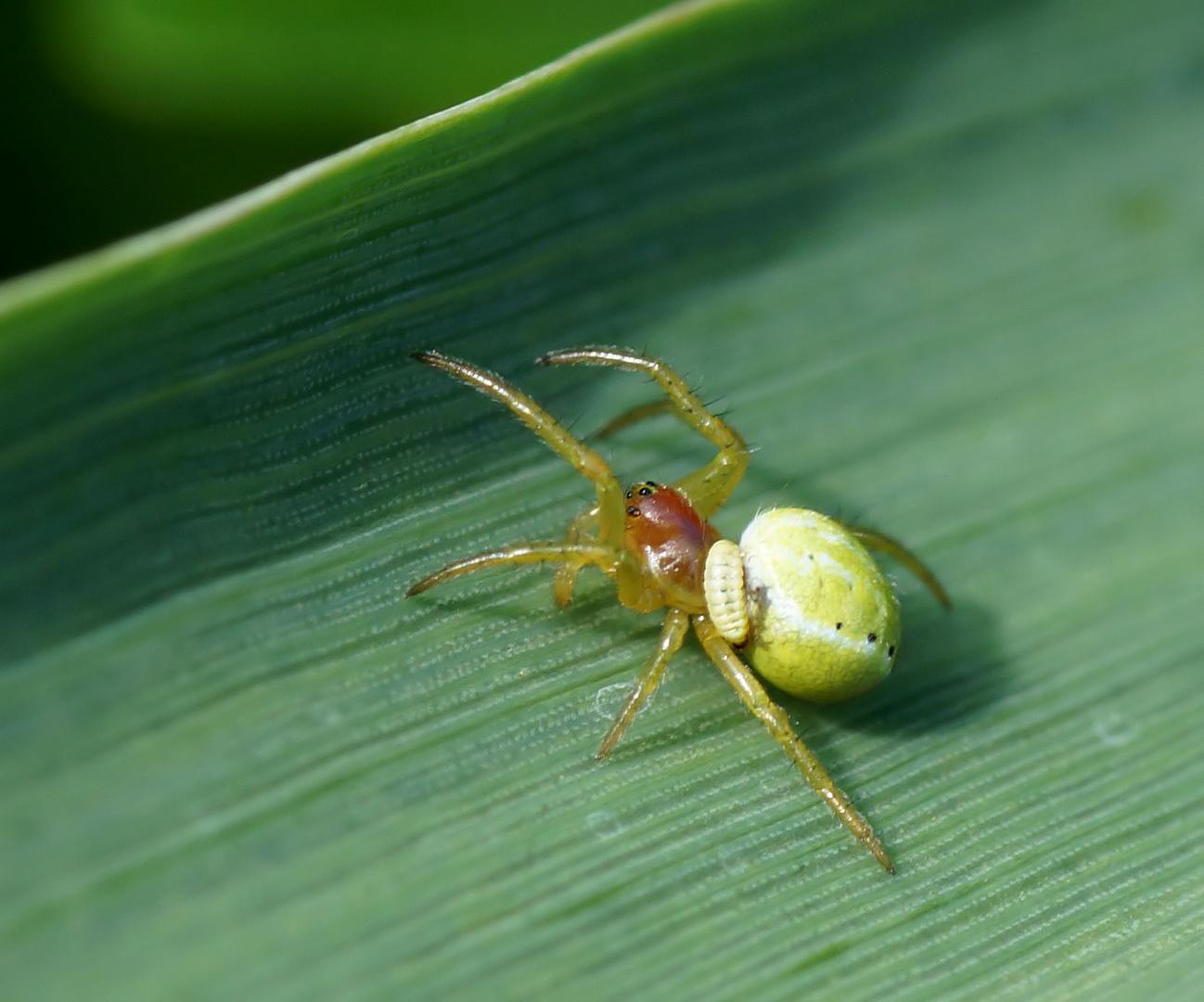 Spinnen Doku