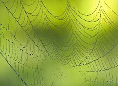 SPINNEN-FINE-ART! - L'araignée comme artiste...