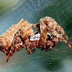Spinnen lernt man bei Spinnen