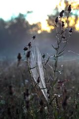 Spinnen MacDrive