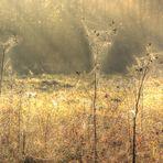 Spinnen Netze am Morgen