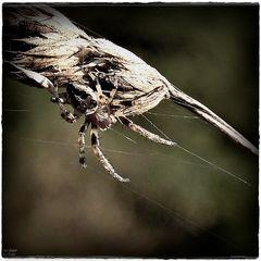 Spinnen sind ...