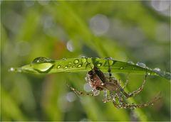Spinnenarbeit...