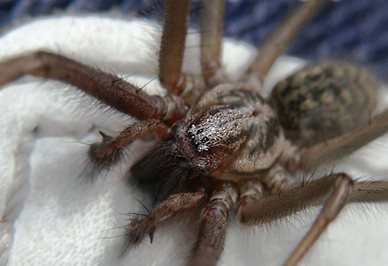 Spinnenaugen.....