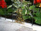 Spinnenbabys auf unserem Balkon