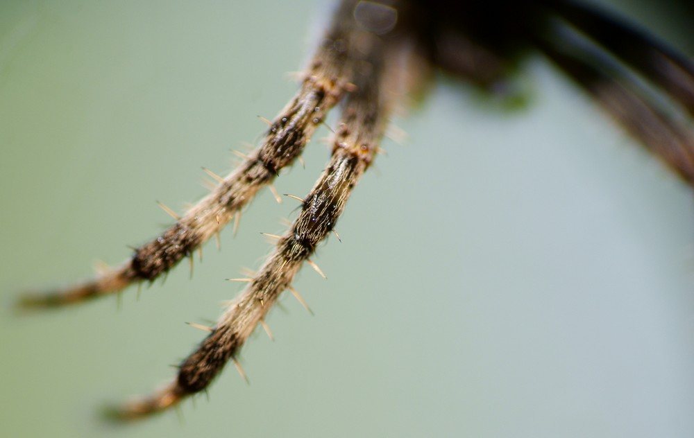 Spinnenbeine