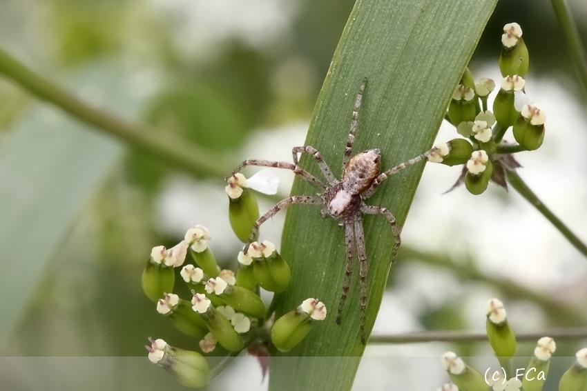 Spinnenbestimmung