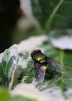 Spinnenblick auf eine Fliege - oder wie würdest Du es betiteln?