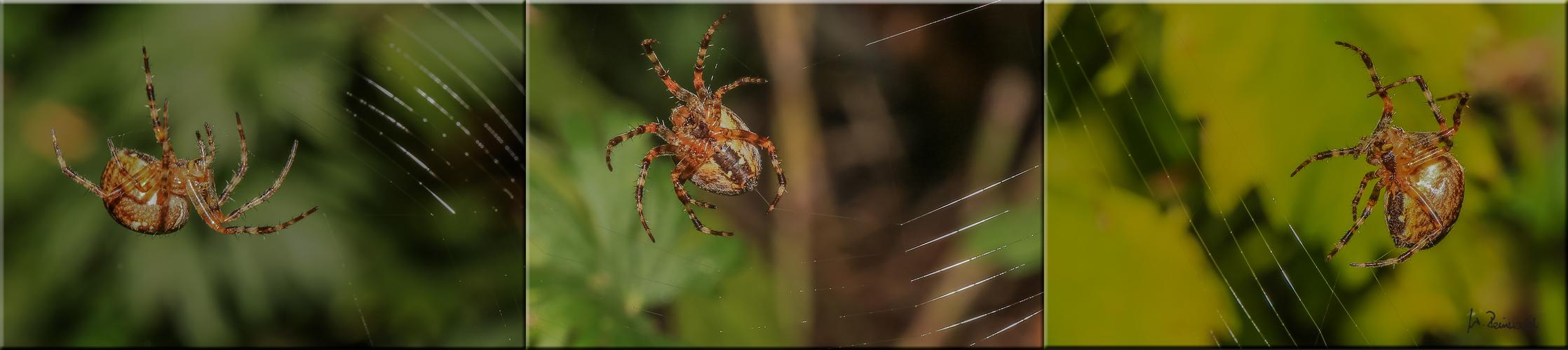 ~ Spinnencollage ~