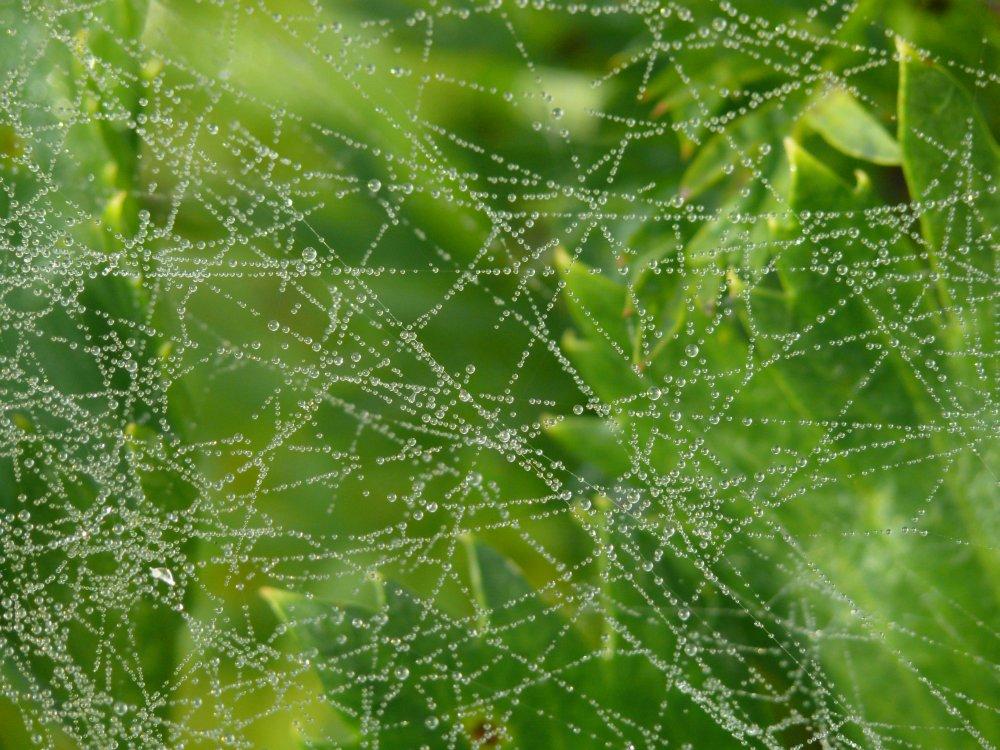 Spinnenfäde mit Perlen