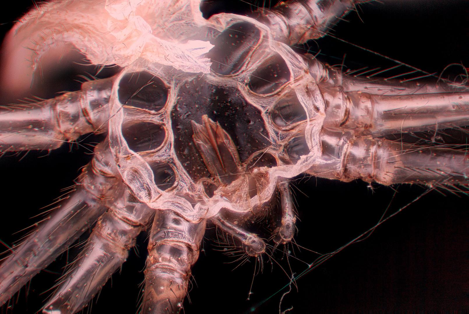 Spinnenhaut in 3D und bei 9,6:1 Vergrößerung