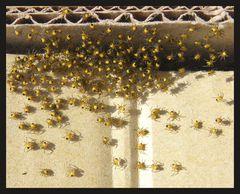 Spinneninvasion