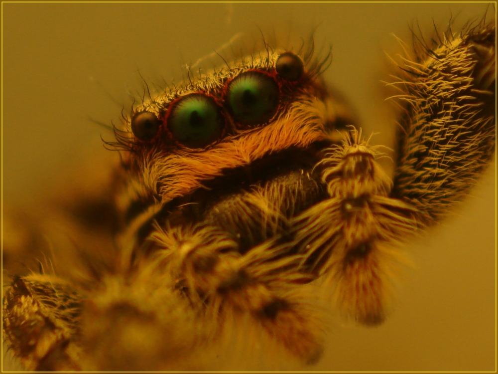 Spinnenmakro