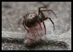 Spinnennest