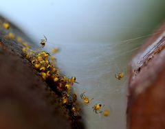Spinnennest am Gartenzaun