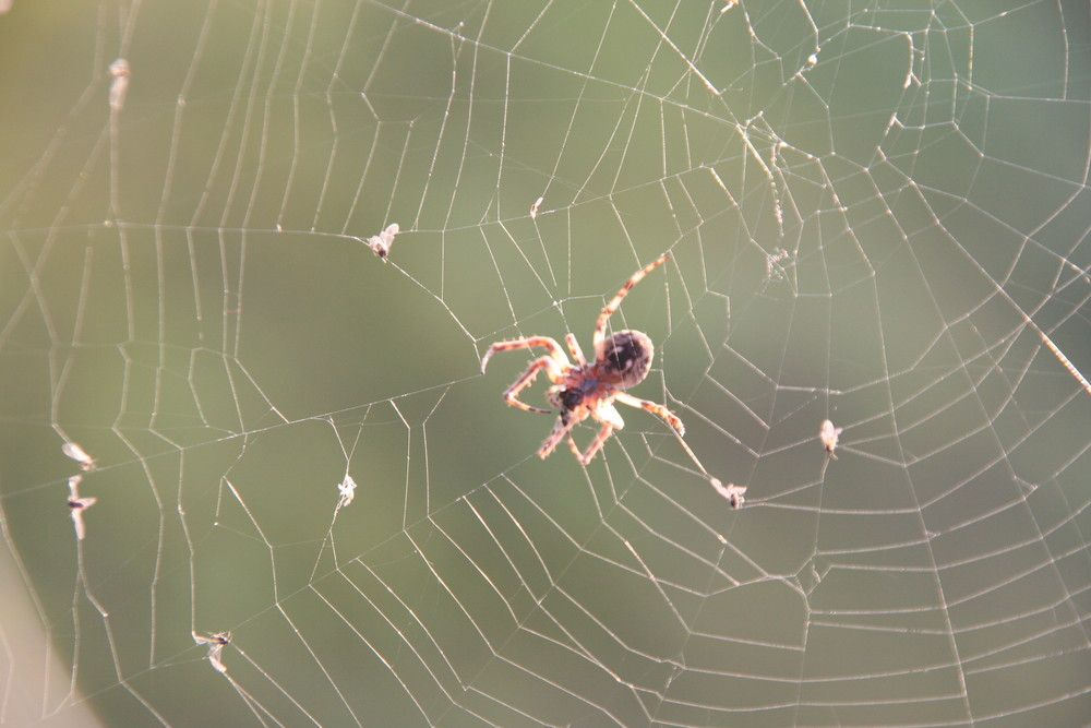 Spinnennetz an der Pöppelmannbrücke in Grimma