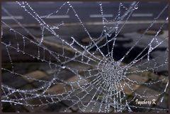 Spinnennetz an meinem Gartentor
