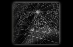 Spinnennetz-Contest