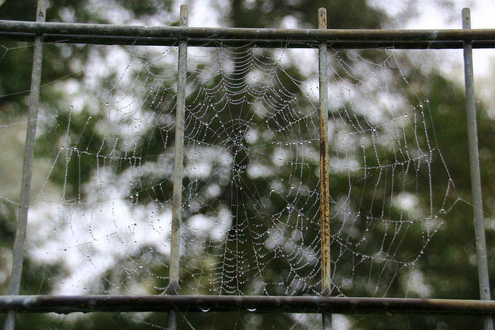 Spinnennetz hinter Gitter