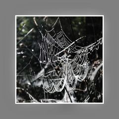 Spinnennetz I.