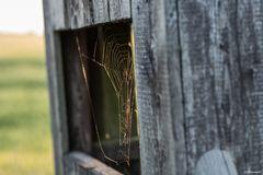 Spinnennetz im Abendlicht