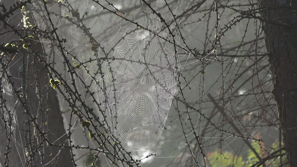 Spinnennetz im Nebel