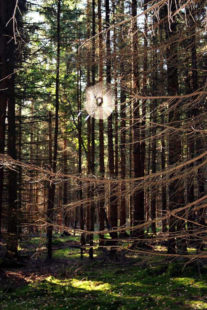 Spinnennetz im wald