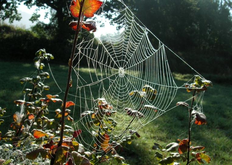 Spinnennetz in der Morgensonne