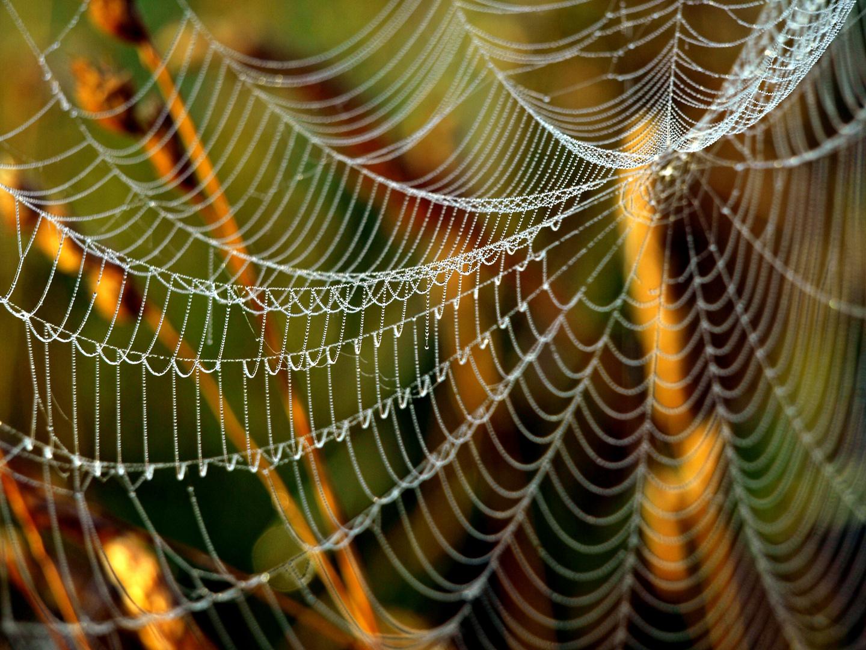 Spinnennetz mit Sogwirkung
