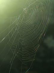 Spinnennetz  /  ragnatela  (1)