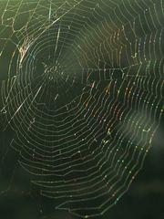 Spinnennetz  /  ragnatela  (2)