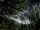 Spinnennetz verzaubert