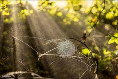Spinnennetz vor abziehendem Frühnebel