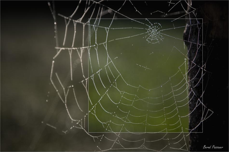 Spinnennetz_02