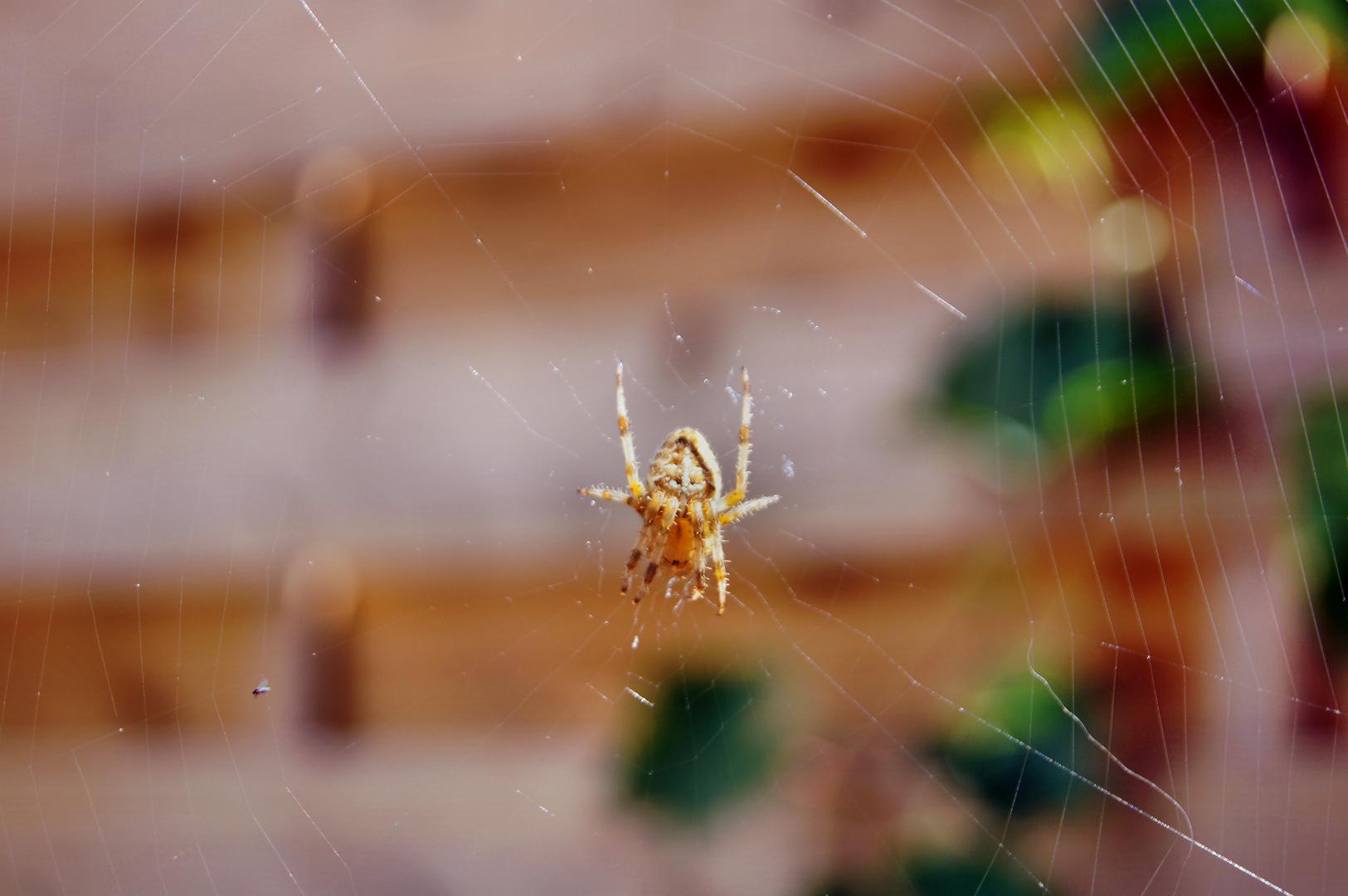 Spinnennetzwerk