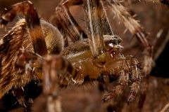 Spinnenportrait