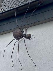 Spinnenriese