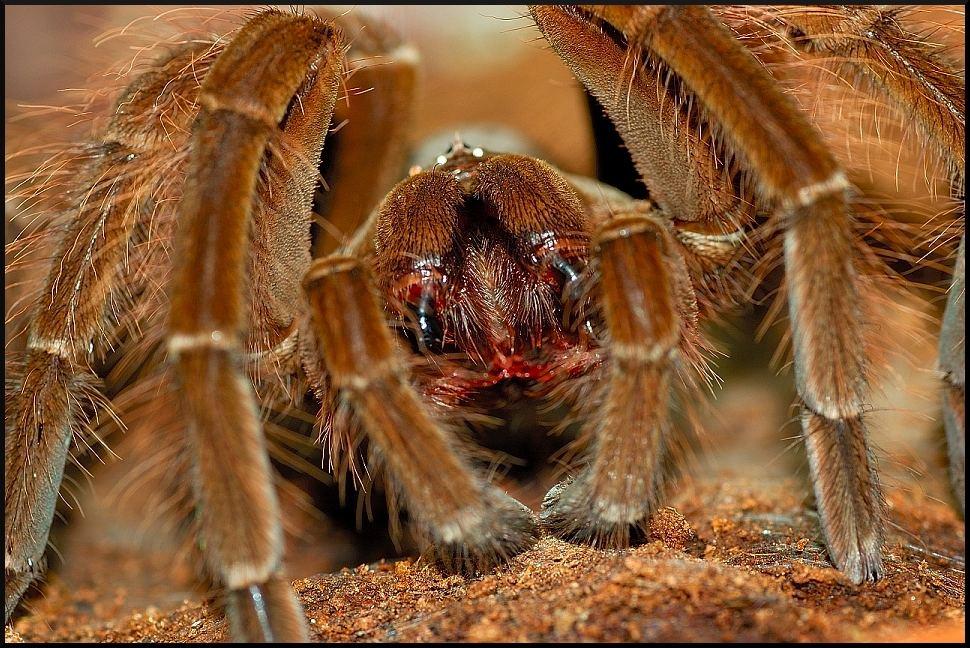 Spinnenschlund...